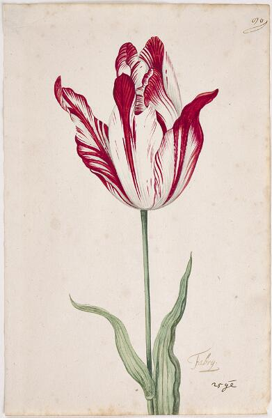 Great Tulip Book: Fabrij