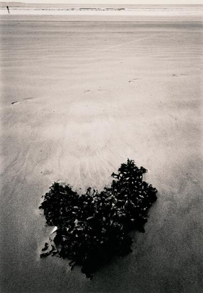 Untitled (Summer, Ireland)