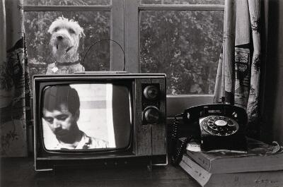 Untitled (Dog in Window Behind TV)